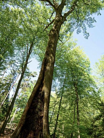 Gruener Wald