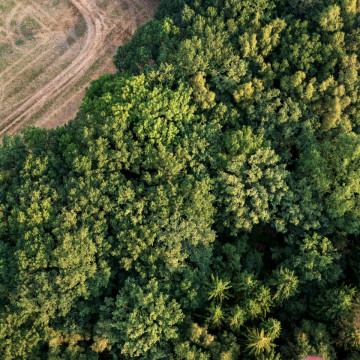 Waldlandschaft von oben