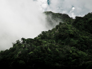 Regenwald in Equador