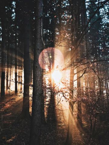 Dichter lichtdurchfluteter Wald