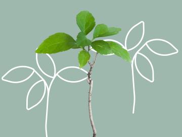 Illustration eines Zweiges