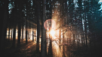 Dichter Wald von Sonnenlicht durchflutet
