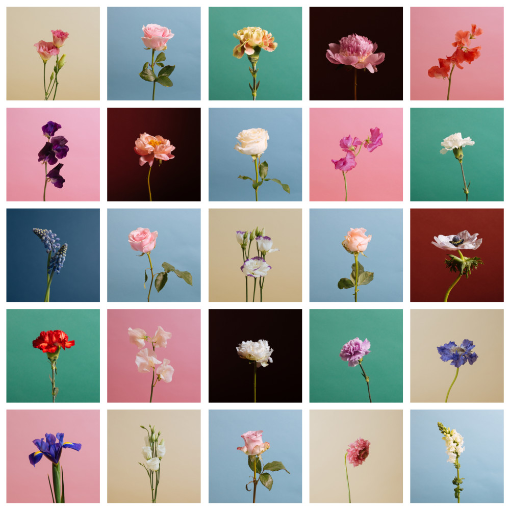 Flowers: A Photo Series
