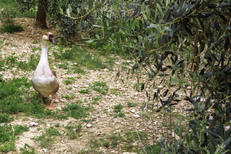 One of the inhabitants on the Tuscan farm we visit