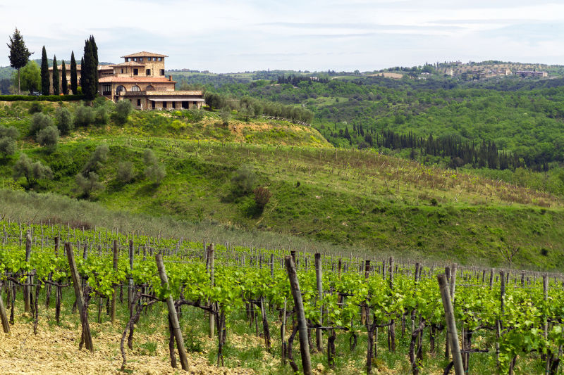 Enjoy lunch in a Chianti winery