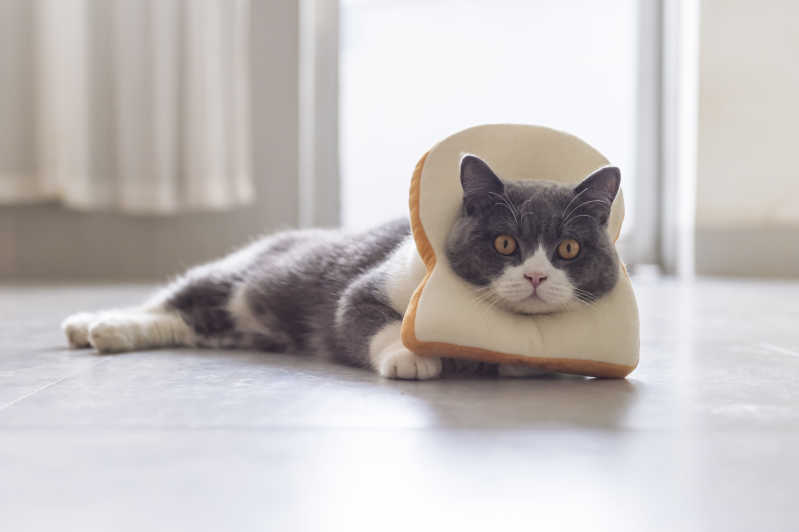 Cat in bread, lying down