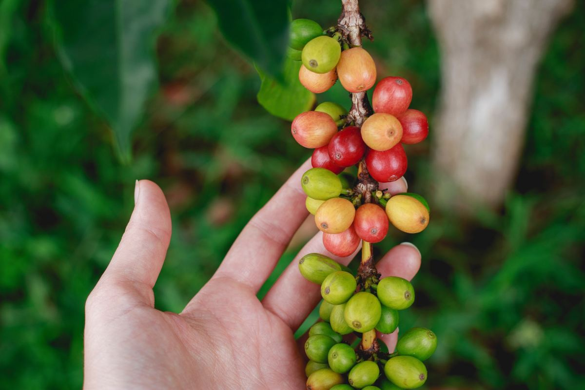 Fair trade: check your supply chain