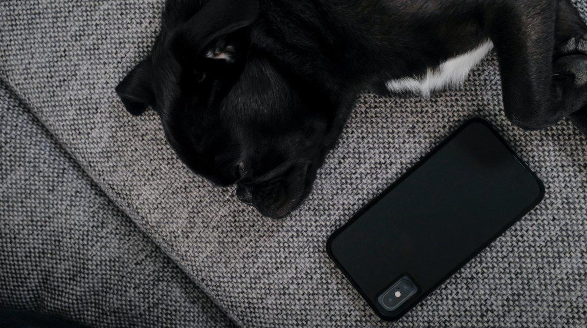 Hund liegt neben Handy - wartet auf Kundenservice für Gastrokasse