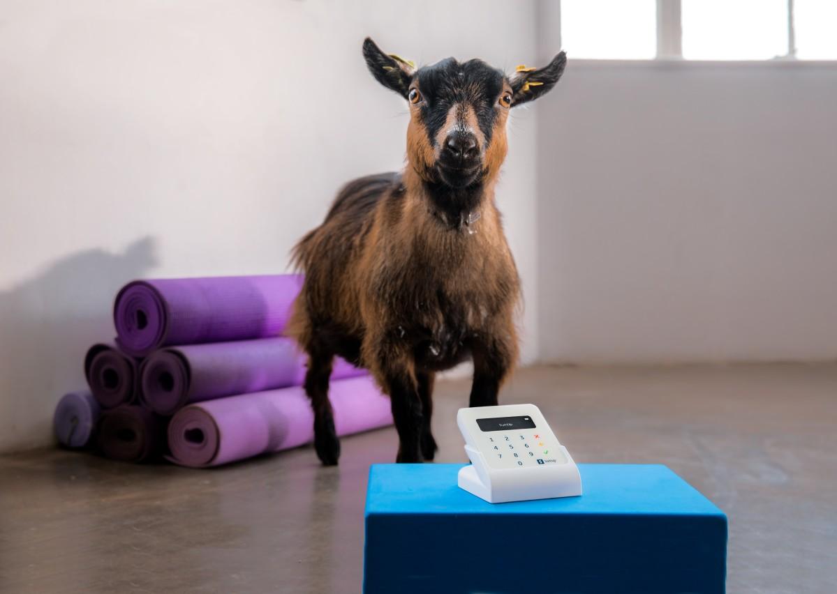 goat-scene