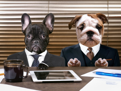 Silly dogs posing as business men.