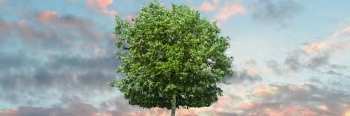 Un arbre pour la journée de l'environnement