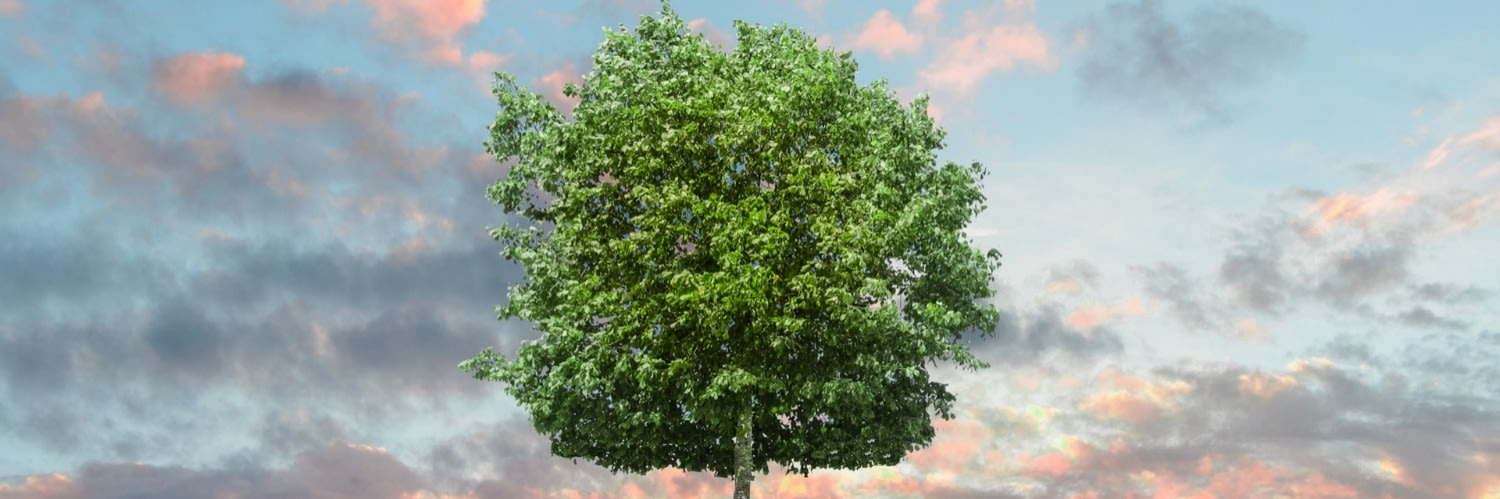 A tree for Environment Day