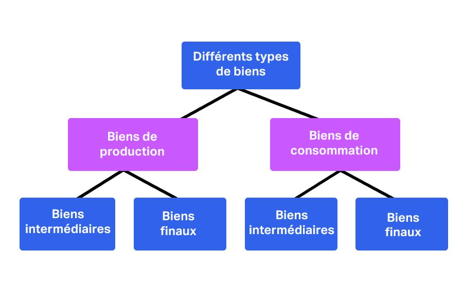 Schéma représentant les différents types de biens