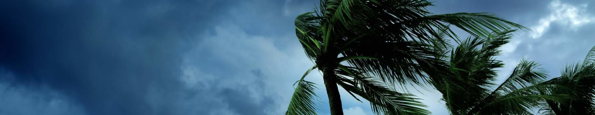 Shine Lawyers | Palm trees blowing in a storm | Shine Lawyers
