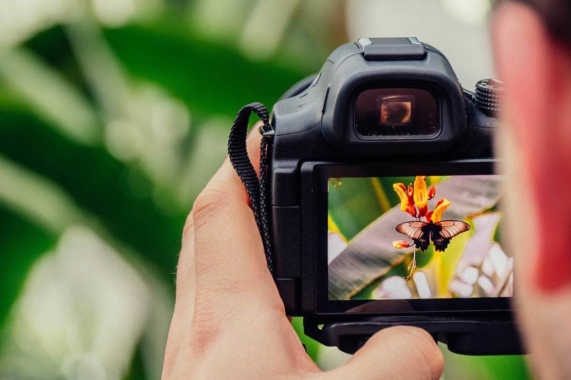 What Is The Best DSLR Cameras For Beginners?