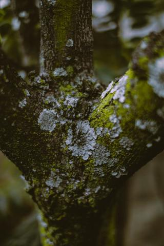 close up of moss on a tree