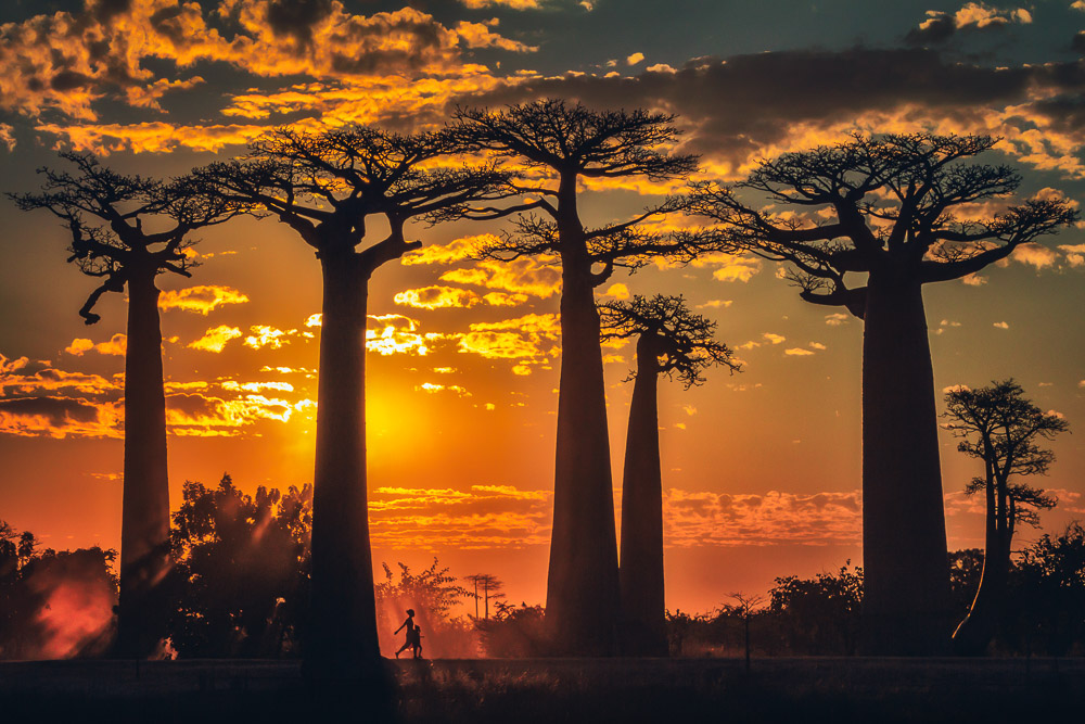 avenue of the baobabs-madagascar-sunset-08