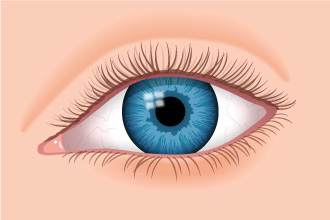 normal eye illustration