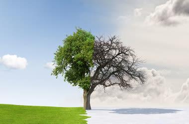 Un árbol separado por el clima de invierno y verano.