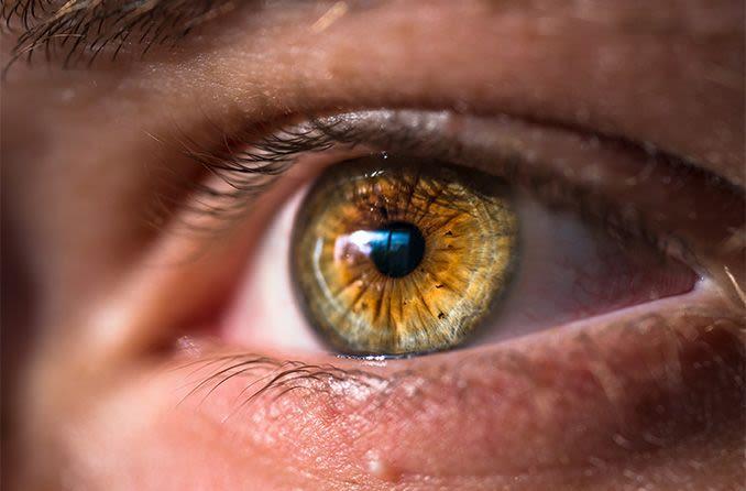 Couleur des yeux noisette