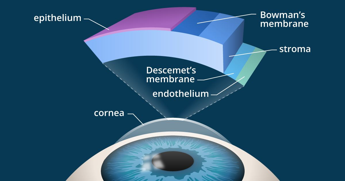 illustration: cross-section of the cornea