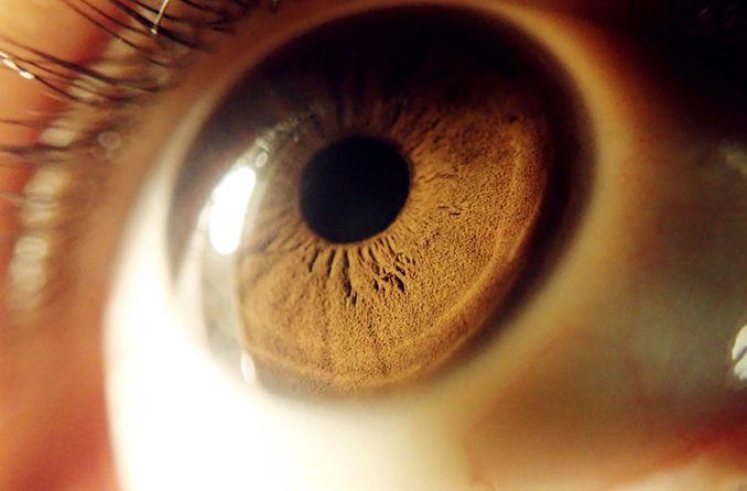 Esclerótica del ojo
