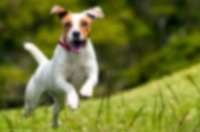 कुत्ते की धुंधली छवि