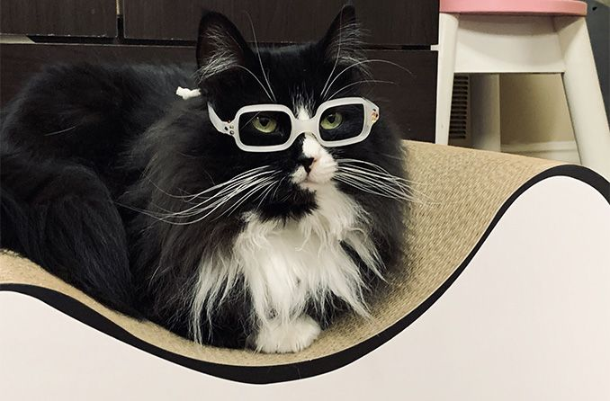 Truffles the cat is making it fun to wear glasses for kids