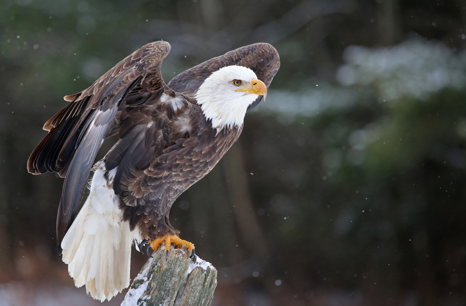 What is eagle eye vision?
