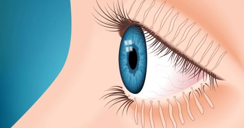 Иллюстрация глаза с мейбомиевыми железами