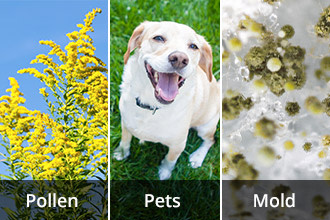 Pollen, Dog and Mold