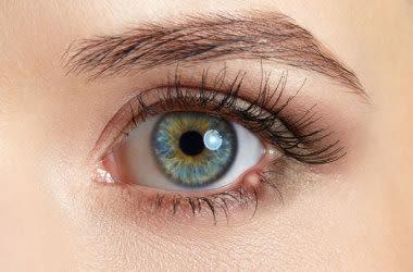 Nahaufnahmebild eines Augenschwammes