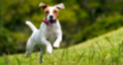 A dog, as viewed by someone with blurry vision.