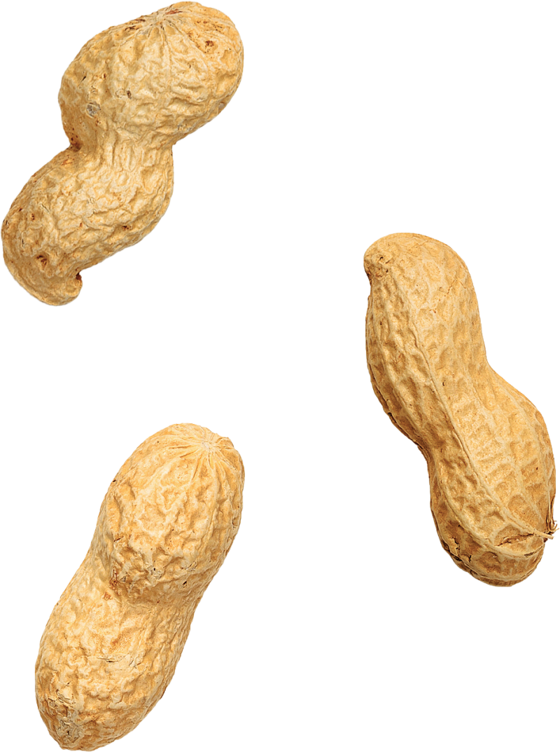 Three peanuts arranged in no particular way.