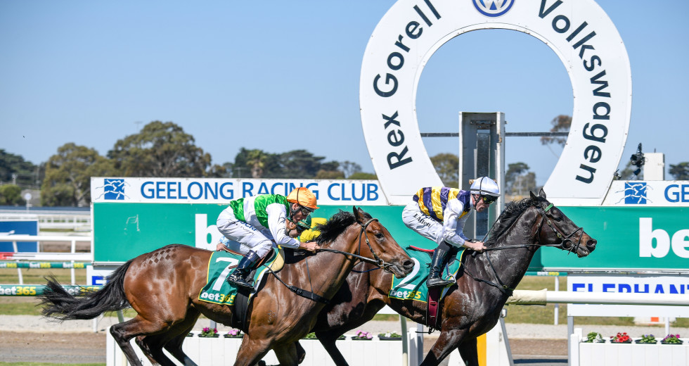 Geelong cup 2021 betting line indian betting sites