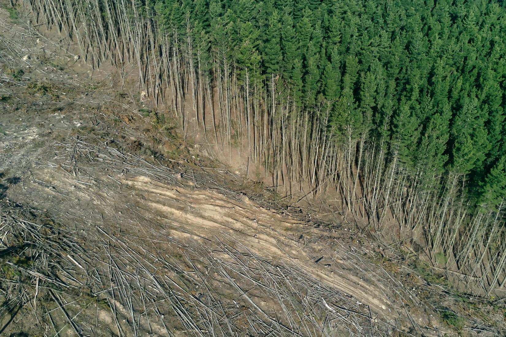 HVO deforestation