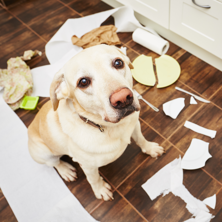 Renters Insurance: What You Should Know If You Own Pets ...
