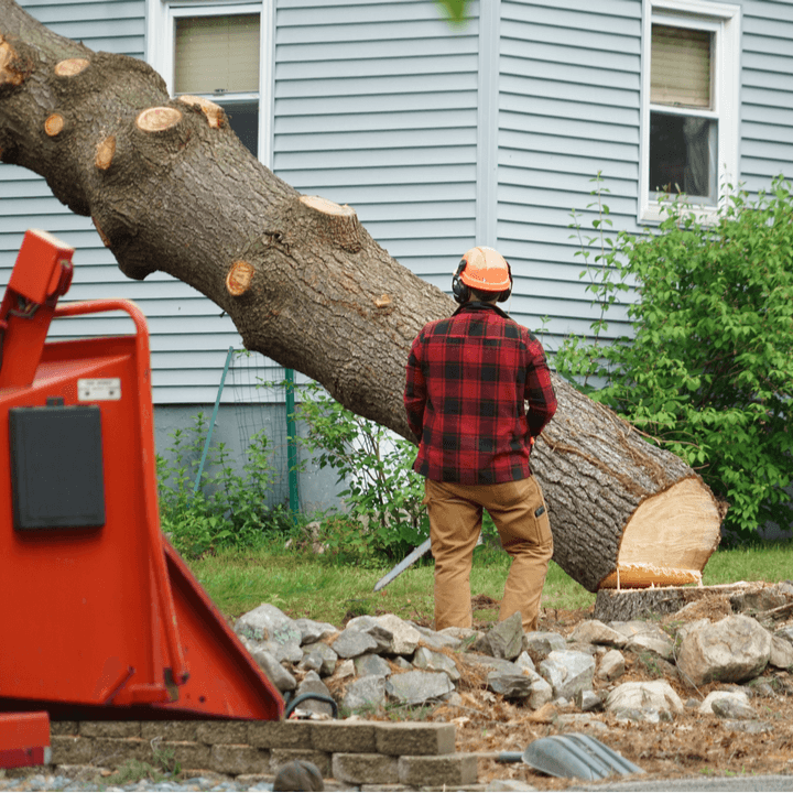 a man removing a tree from a yard