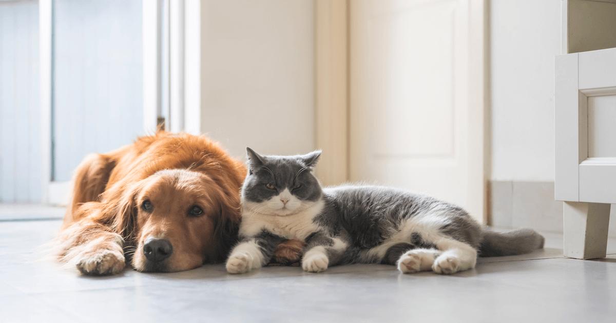Find the Best Pet Insurance - Pet Insurance Guide