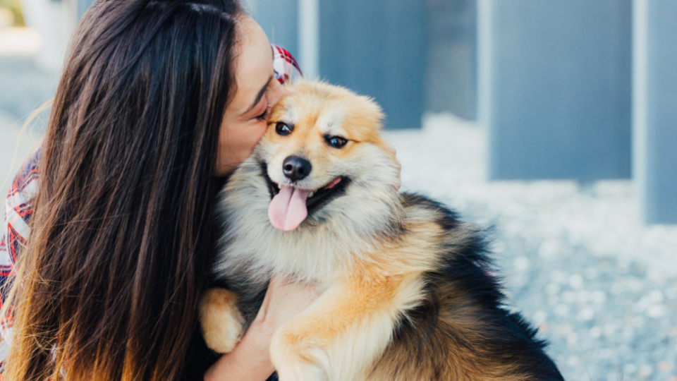Owner gives kiss on cheek to smiling, happy dog