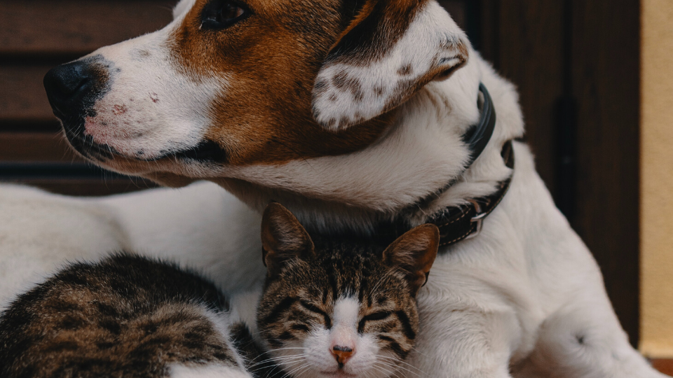 rescue dog and cat