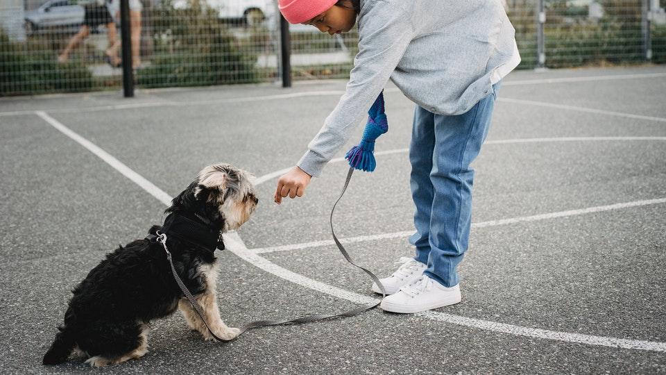 Training a dog on a leash