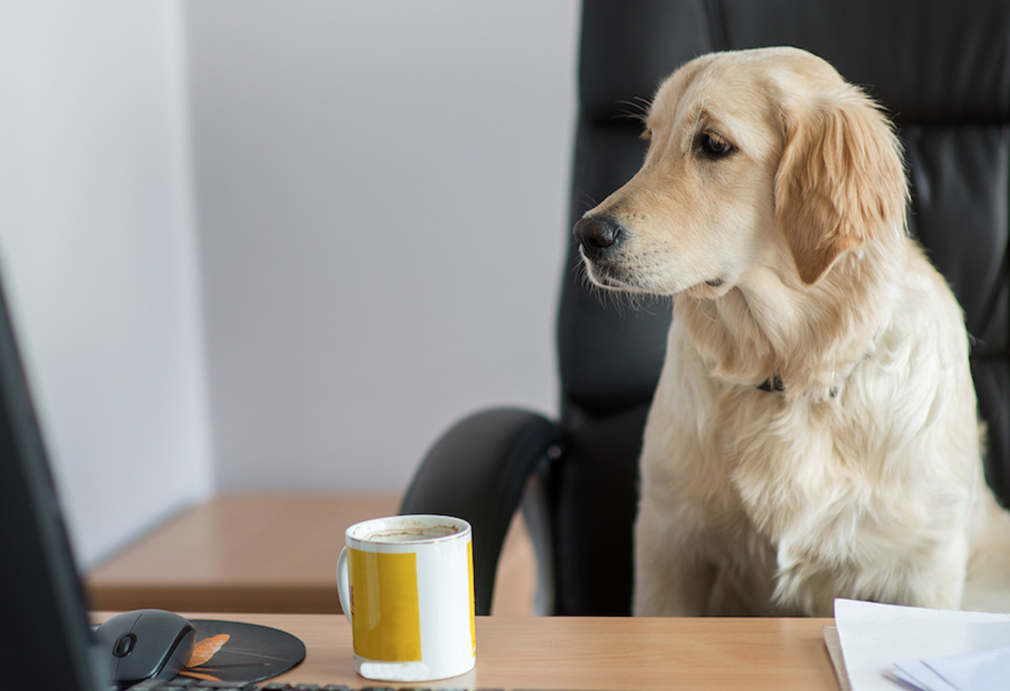 A hard-working professional dog at its desk.