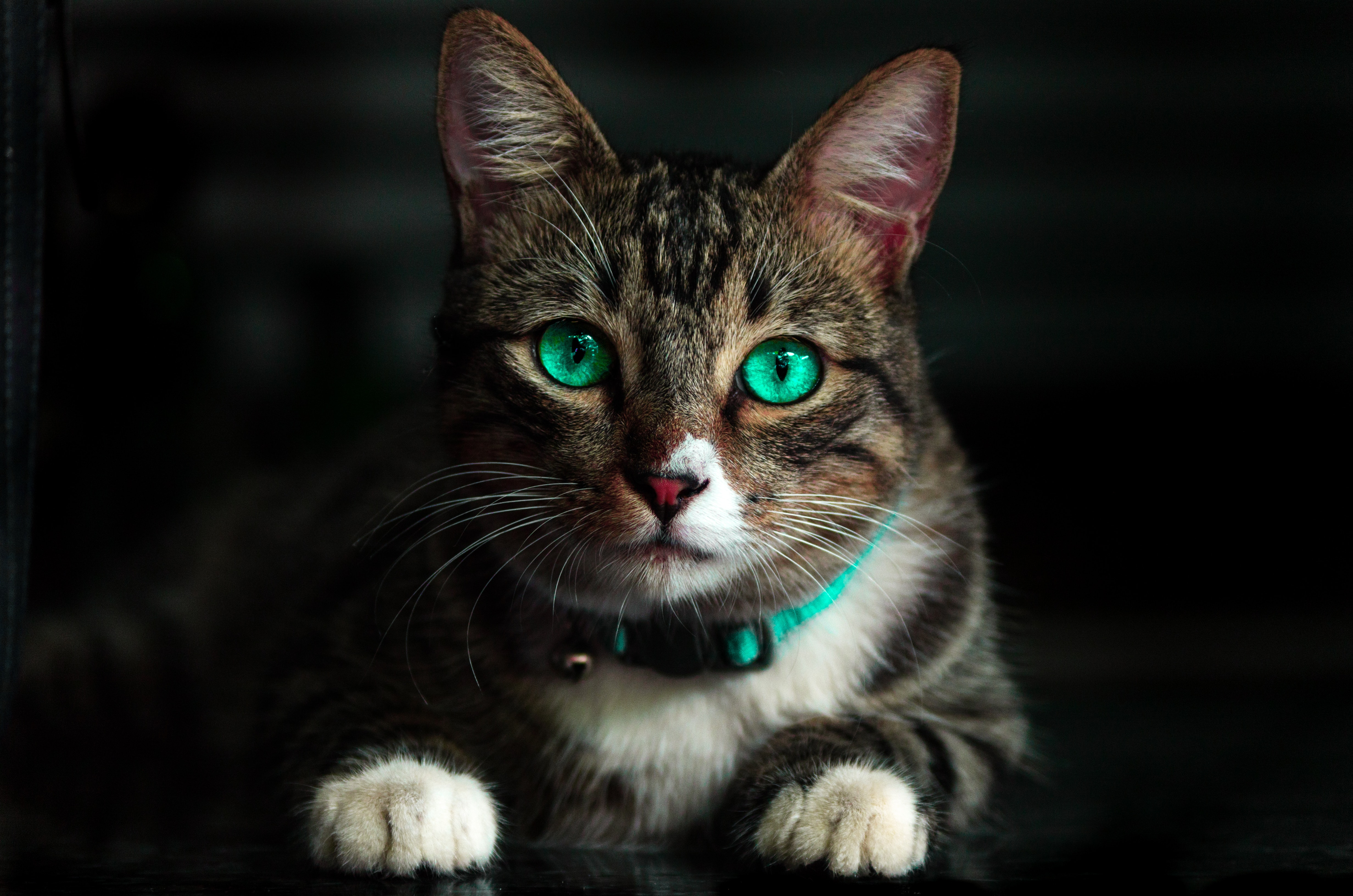 Cat with glowing green eyes and matching collar