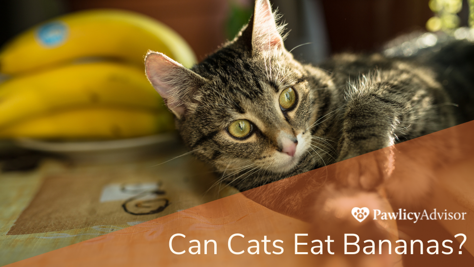 Cat Near Bananas on Counter