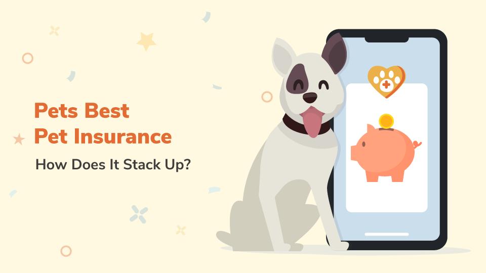 Pet's Best Insurance Review