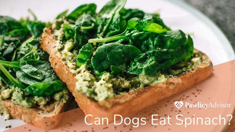 Close-up of avocado toast with spinach