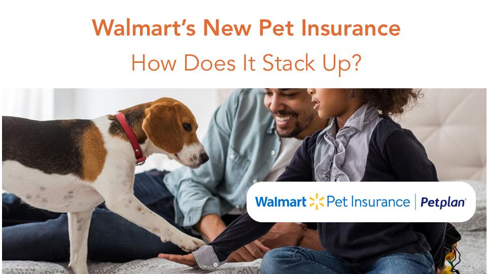 walmart pet insurance review