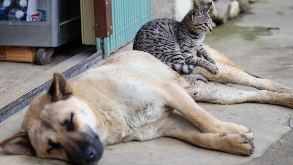 dog and cat in need of affordable pet care