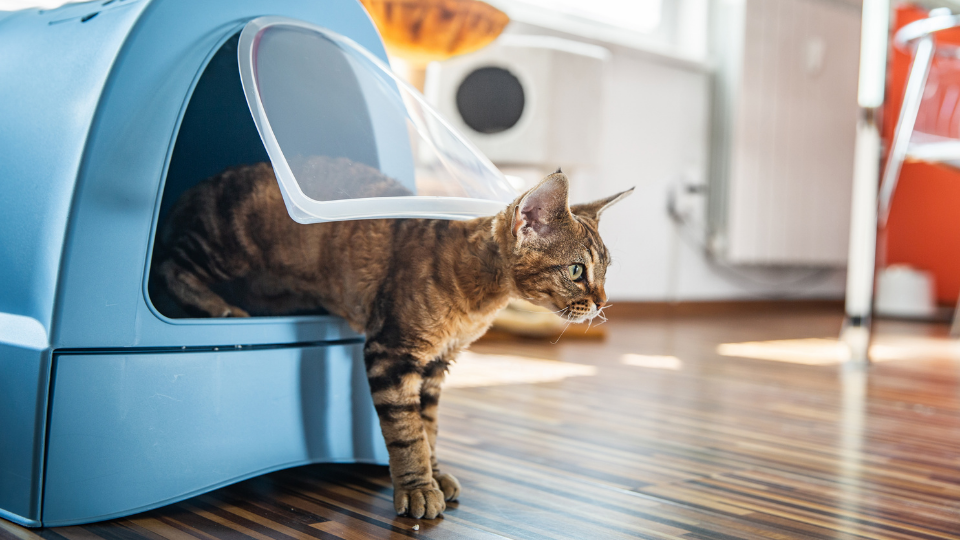 Cat stepping out of litter box